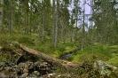 Kindla Naturreservat