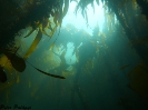 Under vattnet i Norge